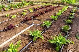 garden irrigation systems. Delighful Irrigation Garden Irrigation Systems To R