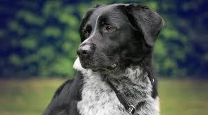 10 Fragen Die Man Hundehaltern Nicht Stellt Moe Me