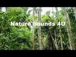 Nature Sounds - Australian <b>Kookaburra</b> And <b>Forest</b> Birds -relaxing ...