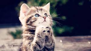 link link image view original images cute cat cats hd wallpaper