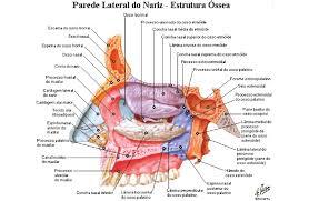 anatomia papel e caneta
