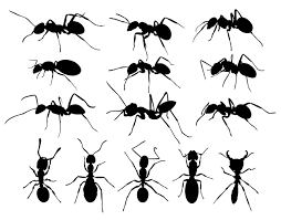 Small Black Flies In Kitchen 27 Ants Facts They Didnt Teach You In School Pestwiki