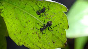 how to get rid of ants in potted plants