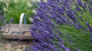10 fuss free shrubs for small gardens