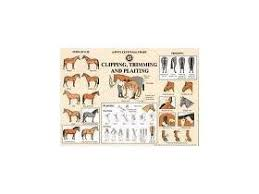 The Pony Club Wall Chart Clipping Trimming Plaiting