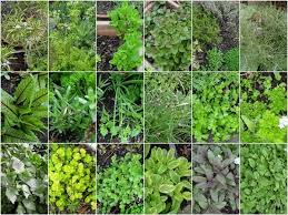 Small Picture How to grow a herb garden design ideas for outdoors and indoors
