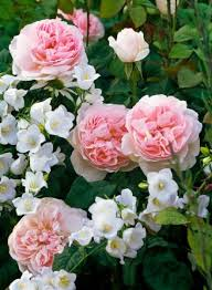 Small Picture 93 best Landscaping with Roses images on Pinterest Flowers