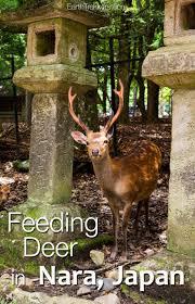 Whitetail Deer Feeding Chart Feeding Deer In Nara Japan Earth Trekkers