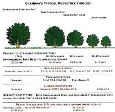 Plant Pot Sizes Chart Pernime Info