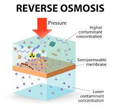 experiment for demonstrating the process of osmosis