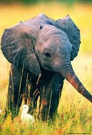Iphone Wallpaper Hd Elephant - wallpaper