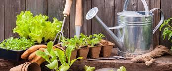 Prace w ogrodzie: kalendarz prac w ogrodzie na wiosnę i cały rok