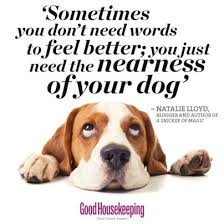 Dog Quotes Unique Our Favourite Dog Quotes Good Housekeeping