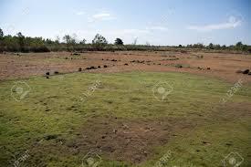 dry grass field background. Steppe Landscape - Golden Dry Grass In The Desert Valley Sun-scorched Heathland Summer Field Background E