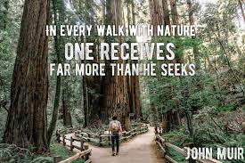 40 John Muir Quotes To Inspire You To Take A Muir Woods Tour Unique Woods Quotes