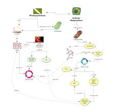 life science concept map photosynthesis and cellular respiration
