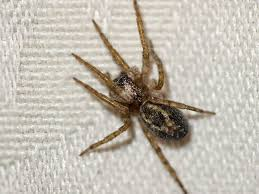 House Spiders The 10 Most Common Youll Find