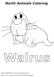 Walrus Coloring Northanimals Coloring Esl English