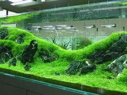 Image result for professional aquarium set up