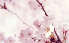 40 beautiful flower wallpapers for your desktop hd