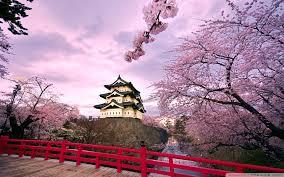 Cherry Blossom Desktop Background Wallpapertag