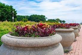 guide to large outdoor planters plus
