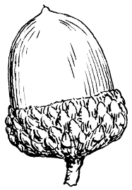 nut clipart black and white. black and white acorn clipart nut c