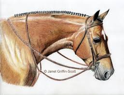 completing the shoulders and drawing the horse s bridle