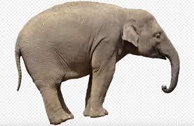 elephant information in elephant essay nibandh agrave curren sup agrave curren curren agrave yen agrave curren curren agrave yen  elephant animal meaning marathi