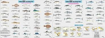 Species Fishes Of The North Atlantic Id Chart