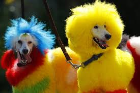 Dogs Can See In Color Scientists Determine Canines Can Use Color To