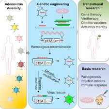 An Engineered Virus Library as a Resource for the Spectrum-wide Exploration  of Virus and Vector Diversity - ScienceDirect