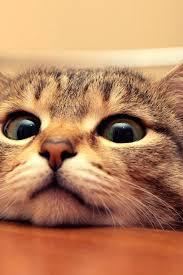cute cat wallpaper iphone. Plain Iphone Cute Cat Wallpaper Cats Iphone Hd Intended A