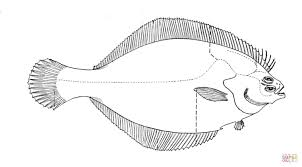Small Picture Flounder 1 coloring page Free Printable Coloring Pages