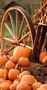 fall wallpaper iphone 6 pumpkin. Brilliant Wallpaper 852x1608 IPhone 6 With Fall Wallpaper Iphone Pumpkin