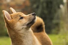 Dogecoin mints 10,000 coins per minute and has an unlimited supply. A Better Breed Of Doge Developers Release New Core With Faster Sync Speed Coindesk