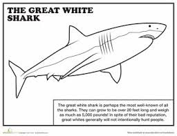 Small Picture Best 10 Shark coloring pages ideas on Pinterest