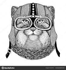 Divoká Kočka Manula Motorka Motorkář Letec Fly Klub Ilustrace Pro