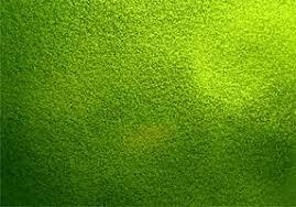 Green Texture Free Vector Art 55 009 Free Downloads