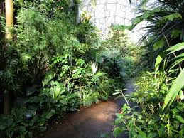the climatron at the st louis botanical garden