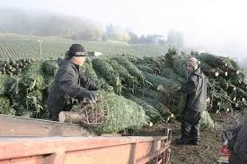 Pricing Guide Local Christmas Tree Lots  Edgewater MD PatchLocal Christmas Tree Lots