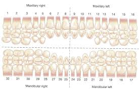 Dental Charting Homework Example Nressaysrrw