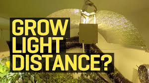 How Close To Keep Led Grow Lights How Far Should My Growlight Be From My Plants