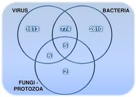Bacteria And Viruses Venn Diagram The Number Of Pathogen Targeted Human Proteins That Are