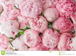 Behang Mooie Bloemen Roze Pioenen Bloemensamenstellingen Daglicht