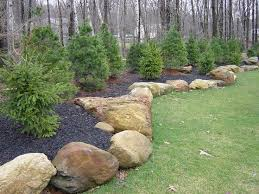 Best Landscaping for Privacy | Clarke Landscapes | Privacy screens are  plantings that give you the