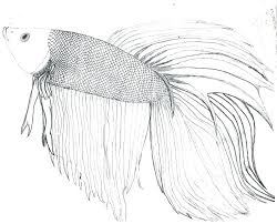 Betta Name Coloring Pages Print Coloring