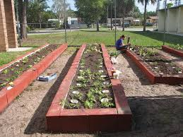Small Picture Basic Vegetable Garden And Basic Vegetable Garden Plans You Could