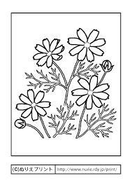 コスモス主線黒秋の花無料塗り絵イラストぬりえプリント