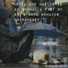 Love Animals Quotes Magnificent Until One Has Loved An Animal A Part Of One's Soul Remains
